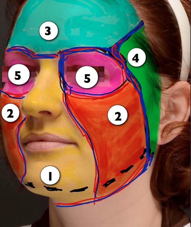 Pav.2 Veido odos anatominiai vienetai